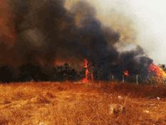 Amenazó a la Caribe un incendio provocado