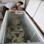 Alien chino