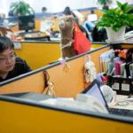Ya hay FB y Twitter en China