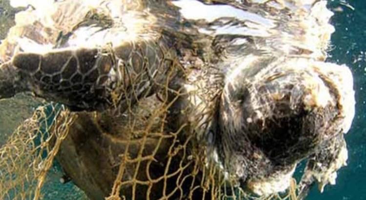 Pesca incidental, causante de la mortandad de tortugas
