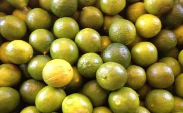 Nadie se ha quejado por el precio del limón
