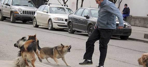 ataque de un animal a un ser humano.