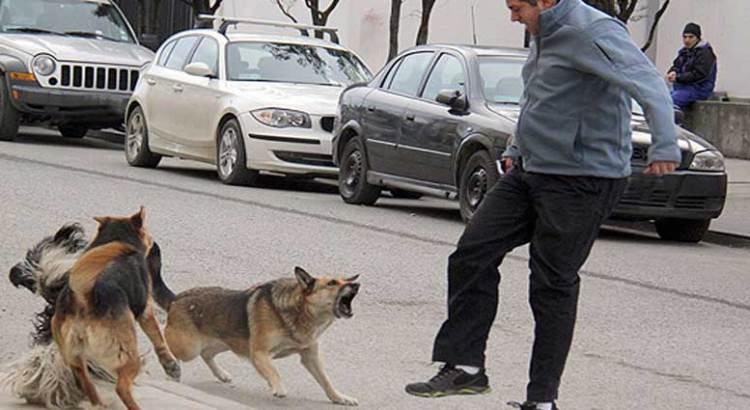 No contempla la Ley de Protección a los Animales el ataque a humanos