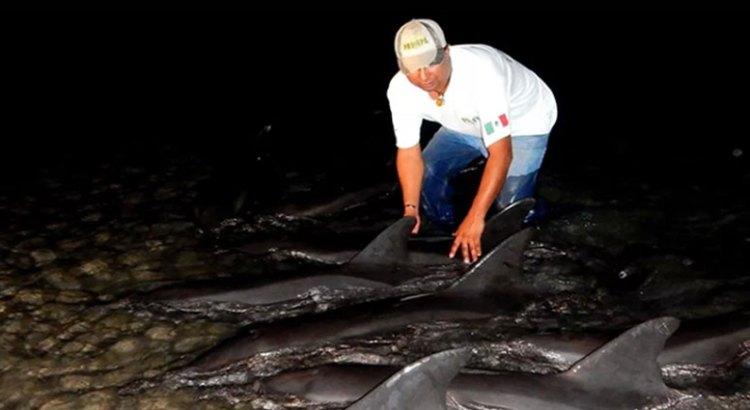 Rescata PROFEPA once delfines