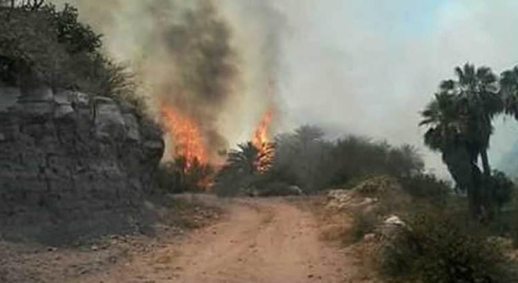 Amenaza el fuego a San Miguel de Comondú