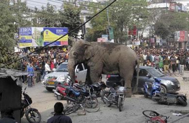 Destruye elefante todo un poblado
