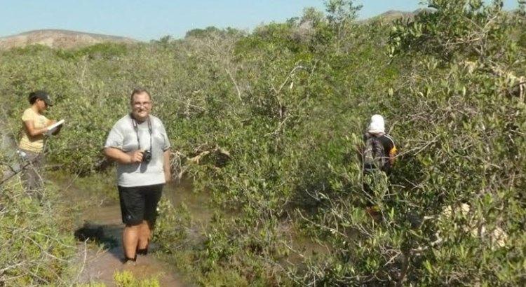 Estudio de manglares, línea de investigación de suma importancia para la UABCS