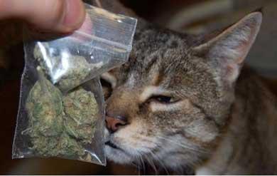 Gato volvió a casa con bolsa de mariguana