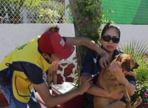 vacunación canina