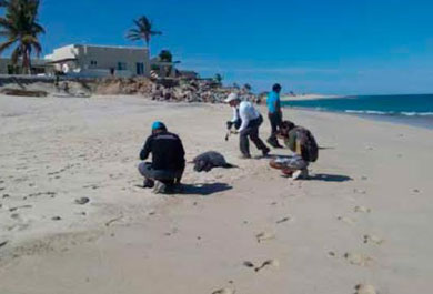 Fue la marea roja la causa de muerte de tortugas varadas
