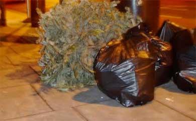 No habrá centro de acopio de árboles navideños
