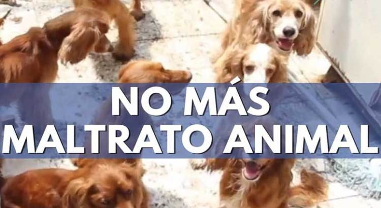 Vinculan  a proceso a  maltratadores de animales