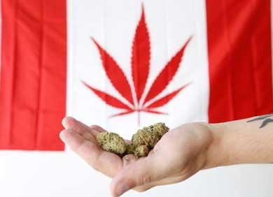 Será legal la mariguana en Canadá