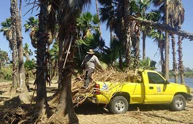 Permanente la limpieza en el Estero Josefino