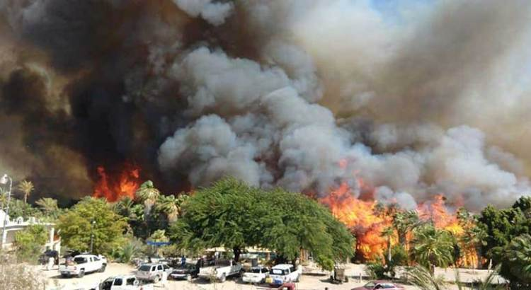 """Una """"catástrofe ecológica"""" el incendio en Palmares de San Ignacio"""