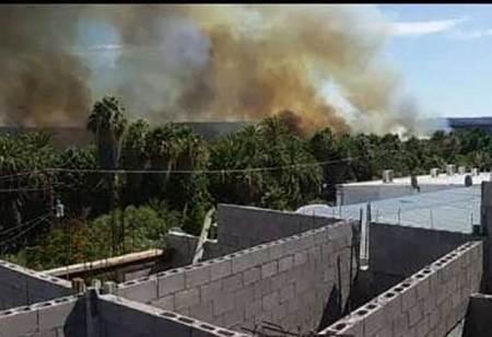 Incuantificable el daño al Palmar de San Ignacio