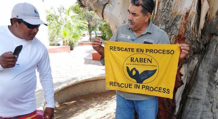 Se integra la UABCS Los Cabos a la RABEN