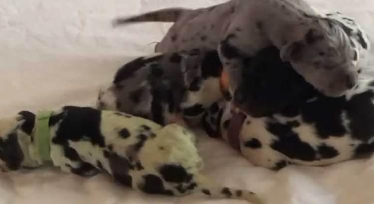 Nace perrito verde en Estados Unidos