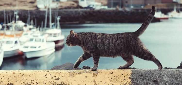 Desapareció el gato durante 5 años