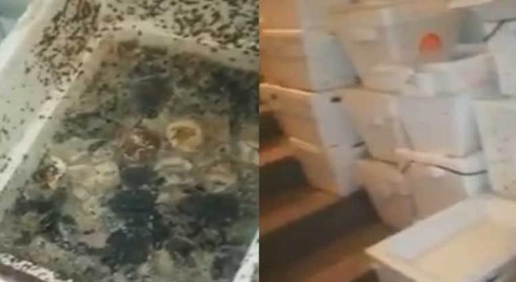 Sin ningún cuidado almacenan huevos de tortuga en el Hotel Casa Dorada