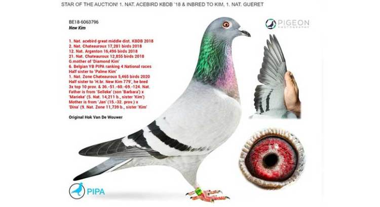 Compró una paloma mensajera en 32 millones de pesos