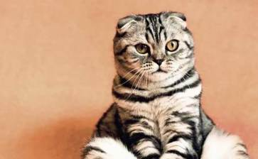 Intentó gato intentó meter drogas a una cárcel