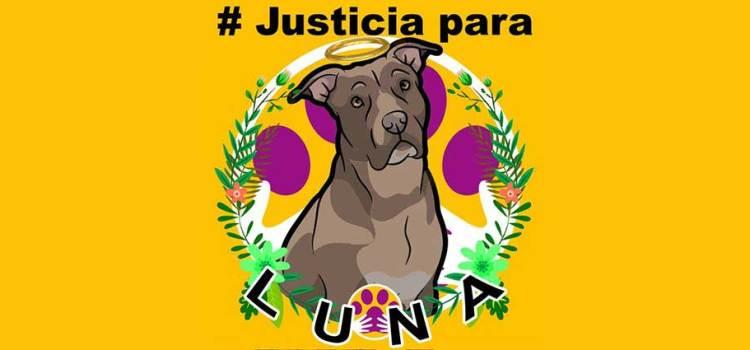 1,250 pesos de multa el castigo a la victimaria de la perrita Luna