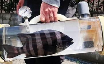 ¿Tu pez se aburre?