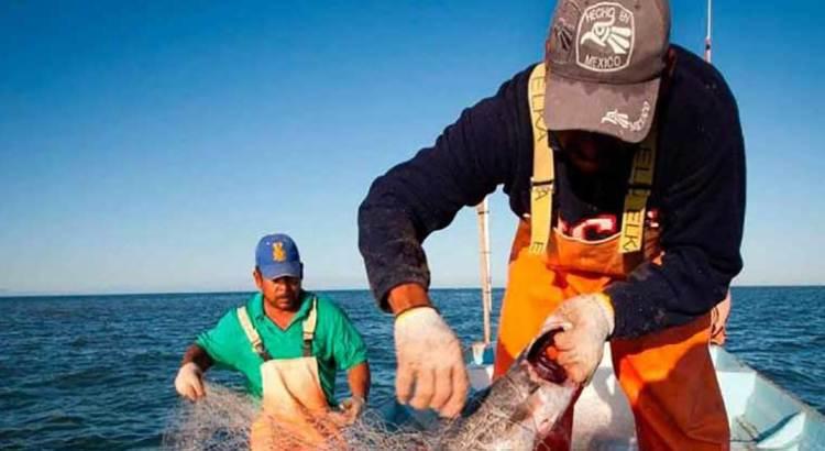 Buscan salvar a la vaquita marina de la extinción