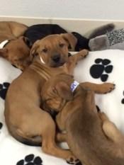 puppies5