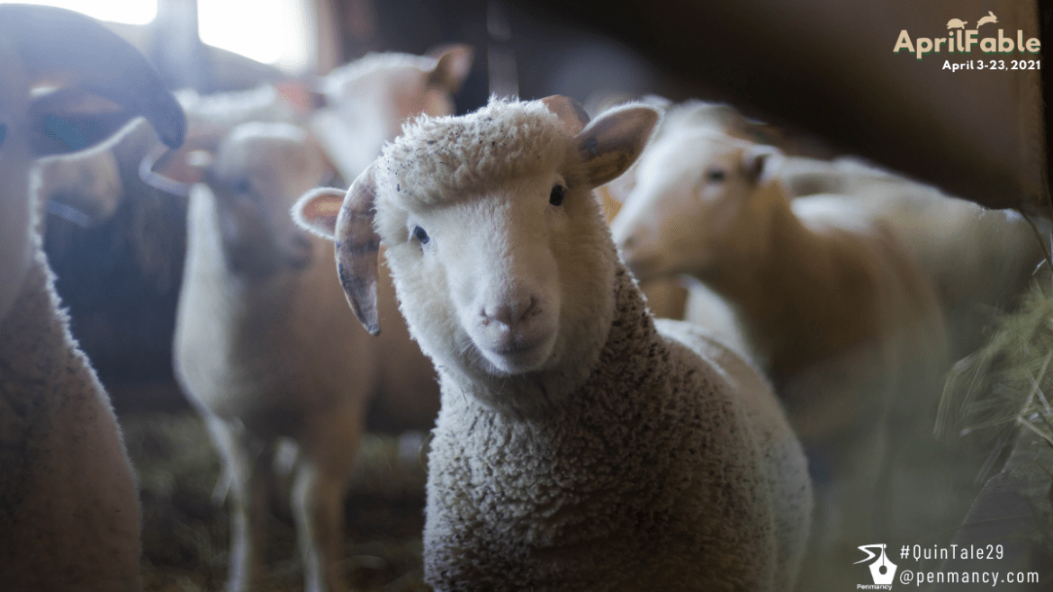 Save Our Sheep