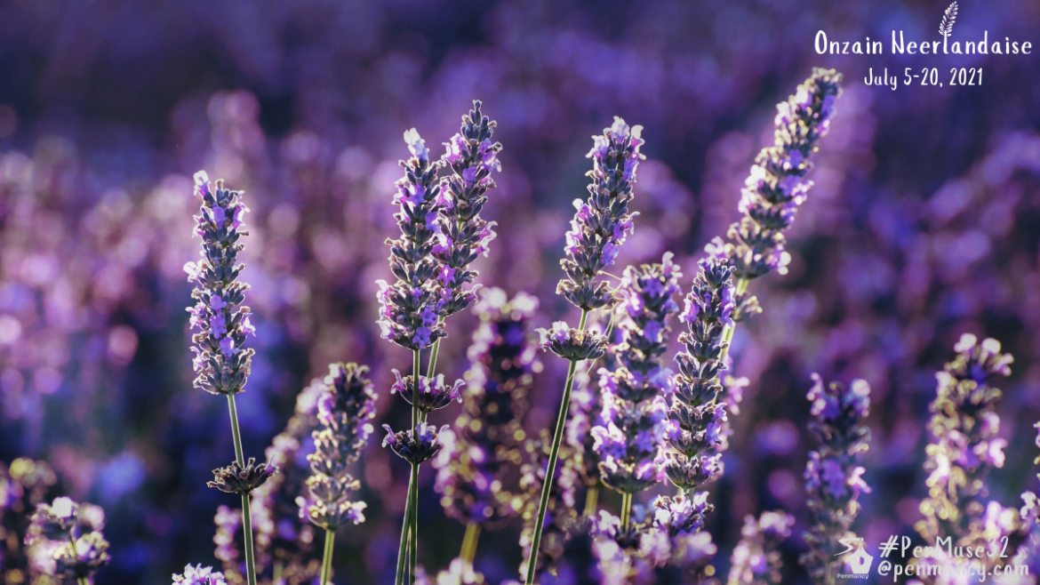 Lavender- The Delicate Beauty