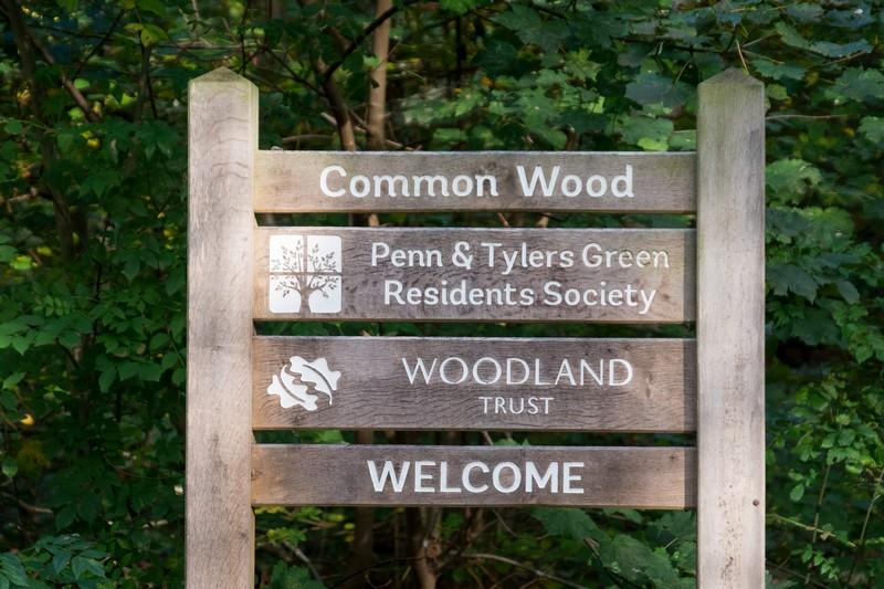 common-wood-2