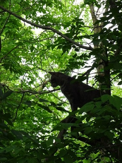 Panther(?) Hunting in Woods