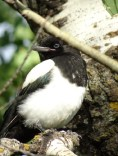 Magpie North Woodlot