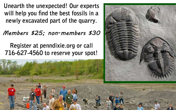 Register for Dig with the experts!