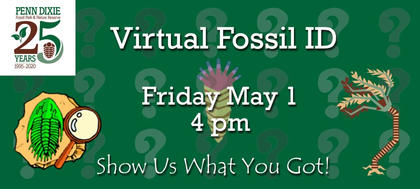 Virtual Fossil ID