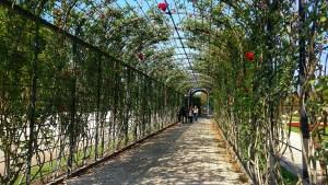 The Green Arch Walkway in Schonbrunn Gardens in Vienna, Austria