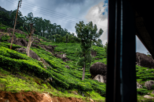 Pallivasal Tea Estate in Munnar