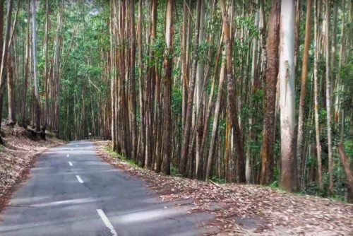 drive through Shola forest range