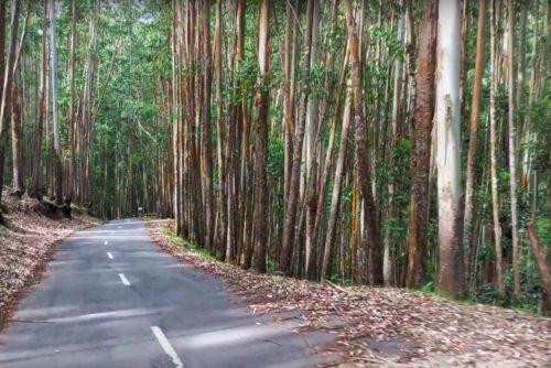 drive through Shola forest range