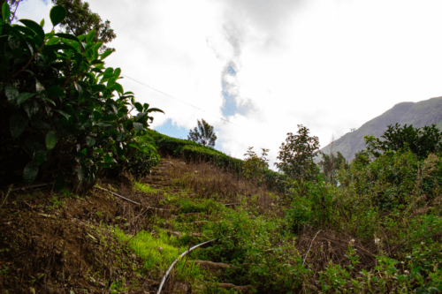Steps leading to Attukad Waterfall from Pallivasal Tea Estate