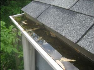 Picture of full eaves trough, prime breading ground for mosquitoes.