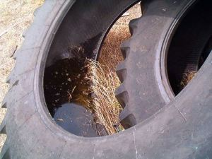 Picture of unused tires full of standing water, prime breading ground for mosquitoes.