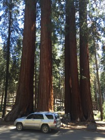 Getting perspective on the Giant Sequoias. The biggest trees in the world by mass.