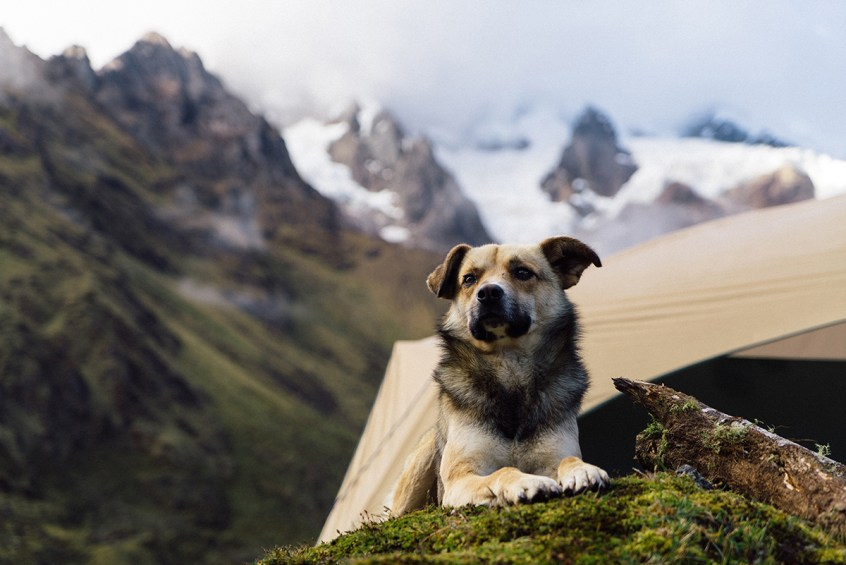 These mountain dogs kept the camp secure