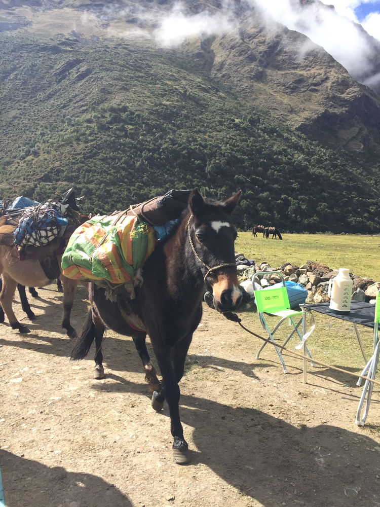 Some of the mules carrying our luggage.