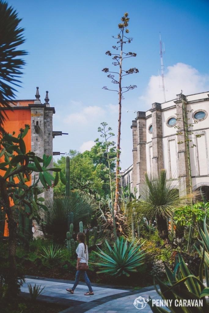 Cactus Garden at the Palacio Nacionál.