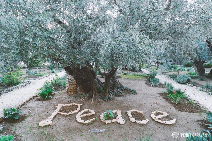 The Garden of Gethsemane.