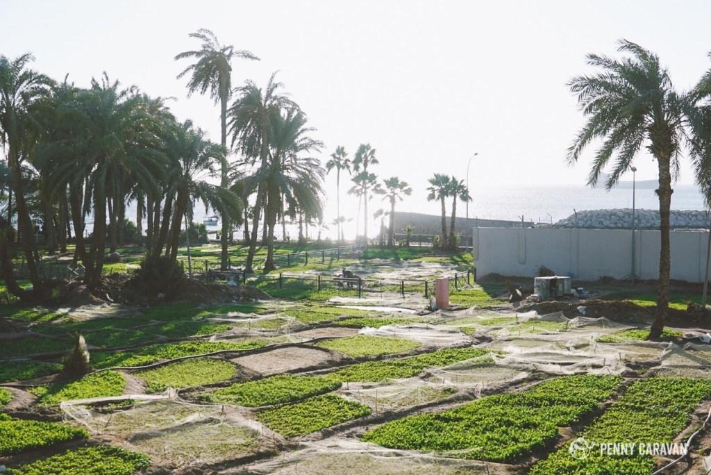 Aqaba | Penny Caravan